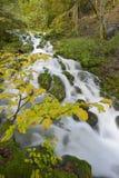 Mountainstream avec des feuilles d'automne Photographie stock