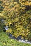 Mountainstream met de herfstbladeren Royalty-vrije Stock Afbeeldingen
