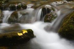 Mountainstream Stock Image