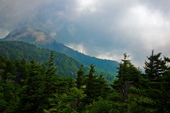 Mountaintop in clouds. Forested mountaintop in clouds.  Grandfather Mountain, North Carolina Stock Image