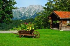 Mountainview met bloemen Royalty-vrije Stock Foto's