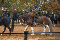 The Mounted Band of The Household Cavalry. London, UK - 31 October 2016: The Band of The Household Cavalry Royalty Free Stock Photos