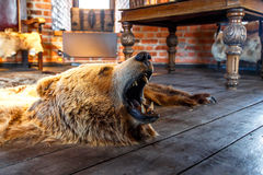 Mounted Bear with Open Mouth Royalty Free Stock Images