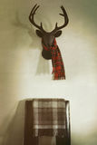 Mounted deer head with red plaid scarf and chair. Below Stock Photography