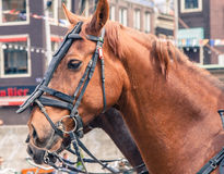 Mounted horse closeup. Horse mounted on the streets Royalty Free Stock Images