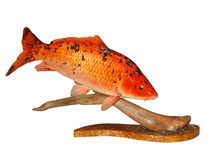 Mounted Koi Carp Royalty Free Stock Photos