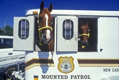 Mounted patrol horse in trailer, Wilmington, DE Royalty Free Stock Images