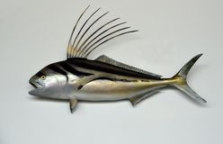 Mounted Roosterfish on White Stock Image