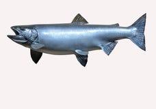 Mounted  Sockeye Salmon Stock Photo