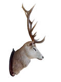 Mounted Stag Head. Isolated with clipping path stock photo