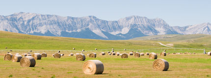Mountian foothills. Farmland and mountains in the foothills of Alberta royalty free stock photos