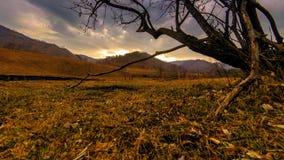 死亡树和干燥黄色草时间间隔在mountian风景与云彩和太阳光芒 水平的滑子运动 股票视频