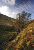 Mountian Stream and Tree. Mountain stream and tree in a fern covered valley of the Peak District in Derbyshire on a sunny Autumn day Royalty Free Stock Photos
