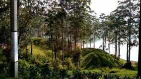 Mountiangebied in Sri Lanka Royalty-vrije Stock Afbeeldingen