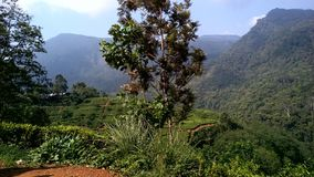 Mountiangebied in Sri Lanka Royalty-vrije Stock Foto's