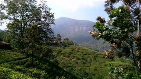 Mountiangebied in Sri Lanka Stock Afbeeldingen