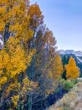 Mountians jesień w Lee Vining w Kalifornia fotografia stock