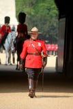 Mountie canadiense real Fotos de archivo libres de regalías