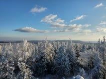 Mountin, bos, en sneeuw Mooi Royalty-vrije Stock Foto's
