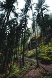 Mountin del bosque Fotos de archivo libres de regalías