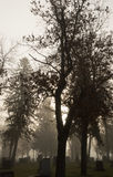 Mountview cmentarz w ranek mgle Obrazy Royalty Free