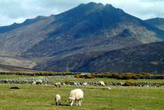 The Mourne Mountains. At the bottom of the Mourne Moutains Northern Ireland Stock Photography