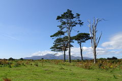 Mourne Mountains Stock Image
