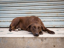 Mournful dog Royalty Free Stock Image