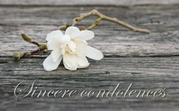 Mourning card. With white magnolia Royalty Free Stock Photos