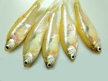 Mourola fish or anchovies Stock Image