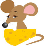 Mouse Royalty Free Stock Photos