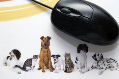 Mouse. Computer mouse with some dogs and cats in great colors Royalty Free Stock Image