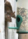 Mouse. Fotografia Stock Libera da Diritti