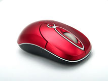 Free Mouse Stock Photos - 4761293