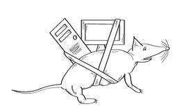 Mouse animal and computer Stock Photo