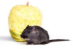 Mouse and apple Royalty Free Stock Photo