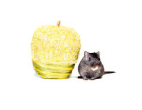 Mouse and apple. Little mouse with yellow apple Stock Photo