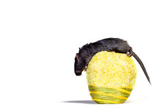Mouse on apple. Little mouse on yellow apple Stock Photos