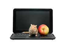 Mouse And Apple On Laptop Stock Photography