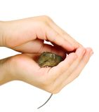 Mouse on arm Royalty Free Stock Photography