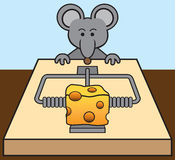 Mouse Being Tempted Stock Photo