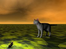 Mouse black and cat grey Royalty Free Stock Photo