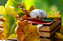 Mouse on book. Mouse and leaves on book royalty free stock image