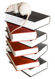 Mouse and books Stock Photos