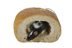 Mouse on bread Royalty Free Stock Photo