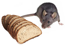 Mouse and bread Royalty Free Stock Photos