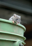 Mouse on bucket. Mouse clinging to edge of bucket royalty free stock image
