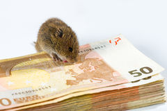 Mouse with a bunch of bank notes � loving and licking its money Royalty Free Stock Photography