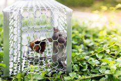 A mouse in a cage Stock Images