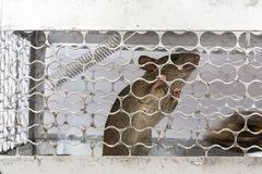 A mouse in a cage Stock Photography